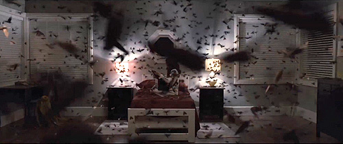 """Los insectos (infestación) son una constante también en """"The Possession. El origen del mal"""""""